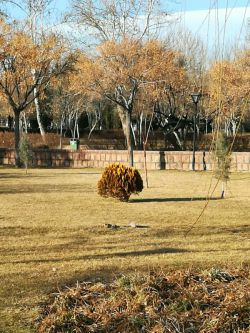 پارک ملت مشهد دی96