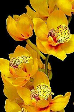 ...ڪـــینه ها را از دل بیرون کنید همدیگر را حلال ڪنید  و یکدیگر را ببخشید تا خداوند هــم شـما را ببخـشد!!  ...بیایید امروز هرکسی را که  بہ ما بدی ڪرده ببخـشیم