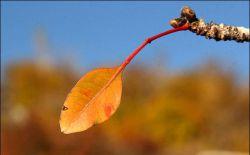زندگی، برگ بودن در مسیر باد نیست، امتحان ریشه هاست.! ریشه هم هرگز اسیر باد نیست