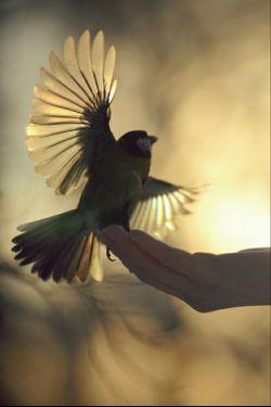 سفیدترین کبوتر آرامش تنها در آستانه ی آن خانه ای آشیانه میگیرد ک تارو پود آن ب رنگ خدا باشد ... شبتون پر طلوع دوستان همیشه خوبم