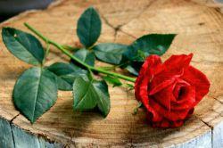 تقدیم ب شما با تمام وجودم ...❤