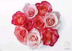 سلام دوستای خوبم میخوام این گلهای قشنگ رو تقدیم کنم به دوستایی که تو این چند وقت همیشه به یادم بودن مرسی که هستین