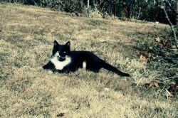 گربه ی خوشگل خودم عکسو گرفتم