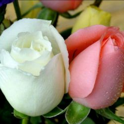 دلت آبی تر از دریا رفیقم به کامت شادی دنیا رفیقم الهی دائما چون گل بخندی شب و روزت خوش و زیبا رفیقم⚘⚘⚘  روز عشق و دوستی مبارک