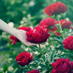 تنفس شروع زندگیست !! عشق قسمتی از زندگیست ♡ اما دوست خوب قلب زندگیست ! ولنتاین مبارک دوستان عزیرم ❤❤