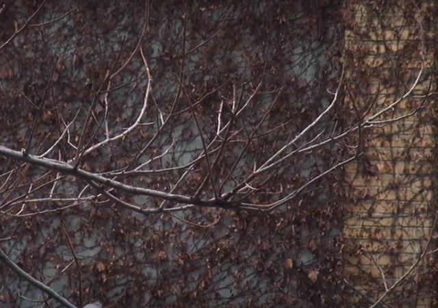 فیلم مستند همه درختان من    www.filimo.com/m/WSnhp