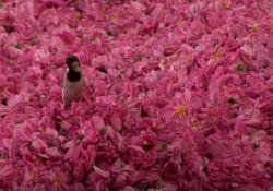 فیلم مستند بانوی گل سرخ    www.filimo.com/m/2Pfzg