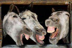 خنده خنده دار شادی ایران جالب دیدنی عکس باحال غم شاد گل مردم طبیعت جالب انگیز زیبا تفریح تهران مشهد قشنگ فان فانی عکس دیدنی روحانی پلیس غمگین پسر دختر نیسان شب جمعه آفریقا سیاه پوست قدیم سو استفاده صداوسیما بهشت جهنم +18