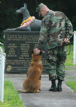 در طول جنگ جهانی دوم، 25 سگ دوبرمن در نبرد گوام کشته شدند.  در حال حاضر یک مجسمه برای سگ ها در جزیره اقیانوس آرام  برای آنهایی که زندگی خود را از دست دادند، وجود دارد.
