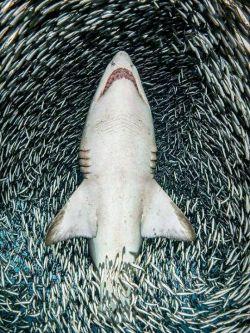 برنده جایزه عکس زیر آب