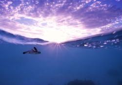 فیلم مستند تعقیب مرجانی     www.filimo.com/m/xthBn