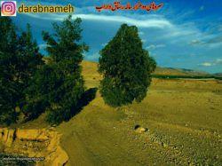 سروهای دوهزار ساله #رستاق#داراب