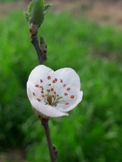 آمد بهار جانان .... عکاسی خودم