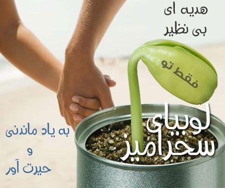 لوبیای سحر آمیز با پیام فارسی - قیمت 5500 تومان - برای خرید عدد 5322188 را به شماره 10000309 پیامک کنید.