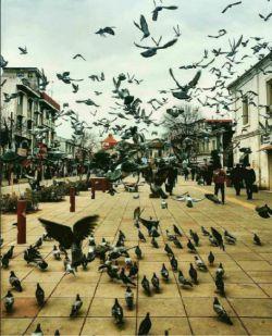 نمای زیبایی از شهر رشت❤️  https://www.bazarazerbaijaan.com/ http://paydarpisheh.com