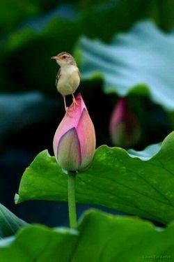 """"""" امروز از هیچ چیز ایراد نگیر """" قول می دهم خورشید درخشانتر ... پرنده ها خوش آوازتر ... مردم مهربانتر ...  و حتی کسب و کارت  پر برکتتر خواهد بود ...  سلااااام ؛ صبح بخیر :)"""