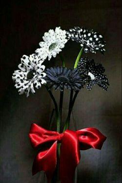 سلام دوستای همیشه خوبم، سال نو مبـارک ... همواره شاد باشین و بهاری