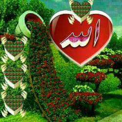 سلام دوستان روز بخیر همتون زیر سایه الله   انشااله