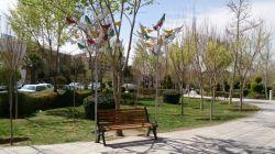 درخت پرنده-بهار97