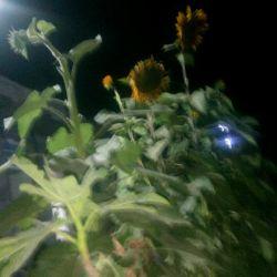 ساعت چهار شب تو باغ باشی چه عالی داره❤❤❤
