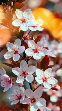 بهارِ همه با فَروردین می آید ؛ بهارِ من , با تو !...  