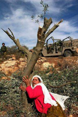 هرچی از فلسطین اشغالی میخوای بدونی .