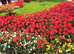 باغ لاله (کرج)