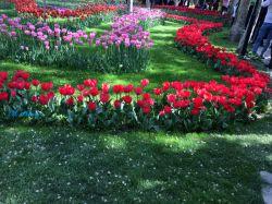 باغ لاله(کرج)