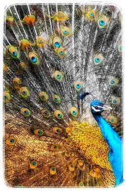 المهدی طاووس اهل الجنه...  عکاس: خواهرزاده خوبم محمدحسین جان