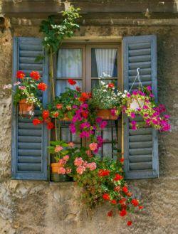 هر آدمی  باید در خانه اش گل شمعدانی داشته باشد که هر بار گلهایش خشک می شود و  دوباره گل می دهد یادش بیفتد که روزهای غم هم به پایان می رسند ️...