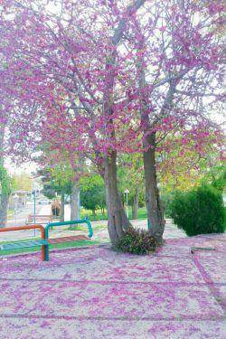یک منظره رویایی از پارکی در غرب ...  #تویسرکان پارک نبوت