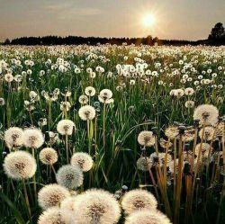 سلام دوستان صبح شما بخیر وسلامت وبرکت هفته شادی داشته باشید