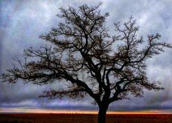تک درخت سایه خوش
