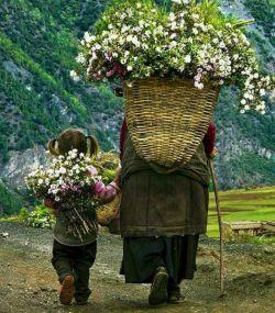 فصلها برای درختان  هر سال تکرار میشوند... اما فصلهای زندگی انسان  تکرار شدنی نیست!  تولد؛ کودکی؛ جوانی؛ پیری؛ و دیگر هیچ، قدر لحظهها را بدان ...