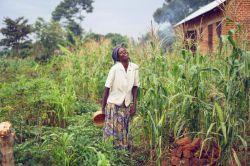 عکس روز نشنال جئوگرافیک   خندیدن زن محلی هنگام برداشت ذرت نزدیک یتیمخانه ای در اوگاندا