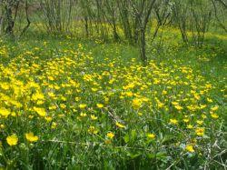 فصل بهار در روستای بابابیر// عکس از رضا بختیاری  بختاج