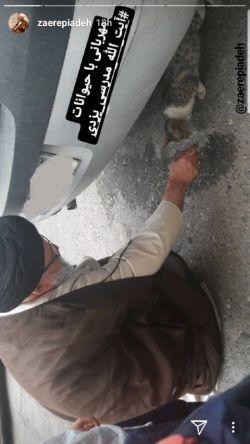 مهربانی با حیوانات  تصویری متفاوت از آیت الله مدرسی یزدی