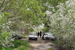 خراسان غربی / کوچهباغی در حومه شمالی شهر نیشابور