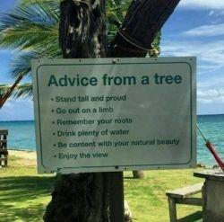 نصحیت هاى یک درخت:   سرافراشته و مغرور باش. متفاوت و مستقل باش.  ریشه هایت را به یاد داشته باش. آب فراوان بنوش. از زیبایى طبیعى ات خوشنود باش. از منظره لذت ببر.