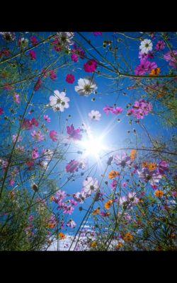 هر صبح آغازیست دوباره برای آموختن و بالیدن ،آغازی برای تکاندن غبار از دل و نشاندن غنچههای محبت و عشق........ پس خدای مهربان ازتو میخواهیم که شروع دوباره زندگی مان به نیکی و سلامت و شادمانی باشد........ ۰۰۰۰سلام صبح بخیر۰۰۰۰
