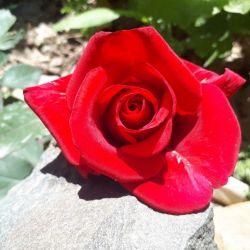 خدایـا در این روز زیبای بهاری اول خردادماه  بهترین ها و زیباترینها را برای دوستان وعزیزانم از درگاهت خواهـانـم خدایا قلبشـان را خوشحال و سرشار از آرامش و خوشبختی کن سلام صبحتون بخیر