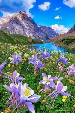 ❁﷽❁..ذکر روز شنبه {یا رَب العالَمین..ای پروردگار جهانیان} مهــــربانا:  دستان نیازمندمان خالی به سویت بلند شده آنها را از نعمت، رحمت و لطفت پر کن؛ پروردگارا:  دل نا آراممان را آرام کن ای آرامش دهندهی دلهای بیقرار و گرفتاریهای ما را برطرف بفرما و نور ایمانت را در قلب ما منور بفرما، ما را زیر سایه خودت قرار ده و باران رحمتت را بر ما ببار؛؛ الهی آمین،،سلاااااام صبحتون بخیر برای امروز تون یک حال خوب آرزو میکنم.. وفات حضرت خدیجه (س )تسلیت باد .۹۷/۳/۵