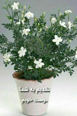یڪ گلدان یاس سفید... در رنگ امید...  باهرچہ صفا... ازسوی خدا...  درشڪل دعا... تقدیم به شما عزیزان