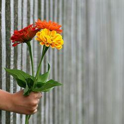 همیشه کسانی هستند  که در نهایت دلتنگی  نمی توانیم آنها را  در آغوش بگیریم  بدترین اتفاق شاید همین باشد . . .