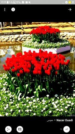 سلام خوبی دوست گلم صبح اولین روز هفته تون بخیر و شادی طاعات و عبادات تون قبول زندگی تون بهاری تقدیم به شما عزیز ترین دوست