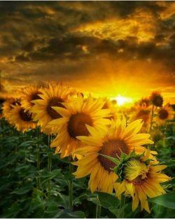 ❤سلام❤ صبحتون مالامال از مهر۰۰۰۰ شاخه افکارتون سبز۰۰۰۰  گندم دستهاتون پر برکت ۰۰۰۰ دشت دلتون حاصل خیز ۰۰۰۰ و خورشید نگاهتون ۰۰۰۰ لبالب از عاطفه باد⚘⚘⚘⚘