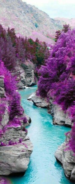طبیعت بنفش ، فقط رنگ بنفش توی این طبیعت دیده می شه