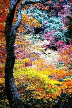 اینم طبیعت هزار رنگ ، انواع رنگ ها رو داره ♥_♥