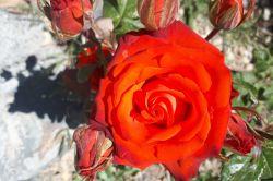 دسته ای از گل عشق و مهربانی همه از رنگ نیاز  بغلی از گل یاس  طبقی از احساس  همه تقدیم شما دوستان گلم نمازو روزه تون قبول حق
