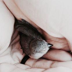 كاش تنهایی پرنده بود ؛ گاهی هم به كوچ فكر می كرد .. ! #نسترن_وثوقی